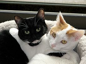 kitty_jpg