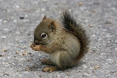 squirrel_jpg