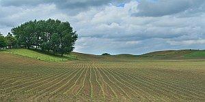 spring_crops
