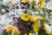 snow_flower_jpg