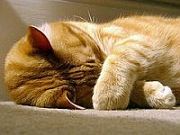 kitty_napping_jpg