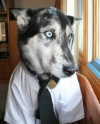 dog_in_tie