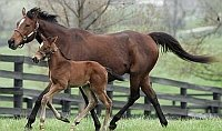 mother_foal