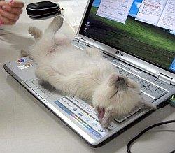 kitty_pic