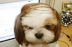 doggie_pic