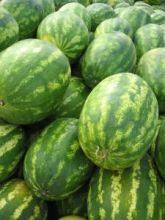 watermelon | BIGG Success