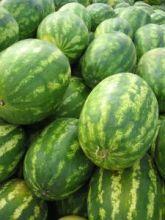 watermelon | BIGG Success